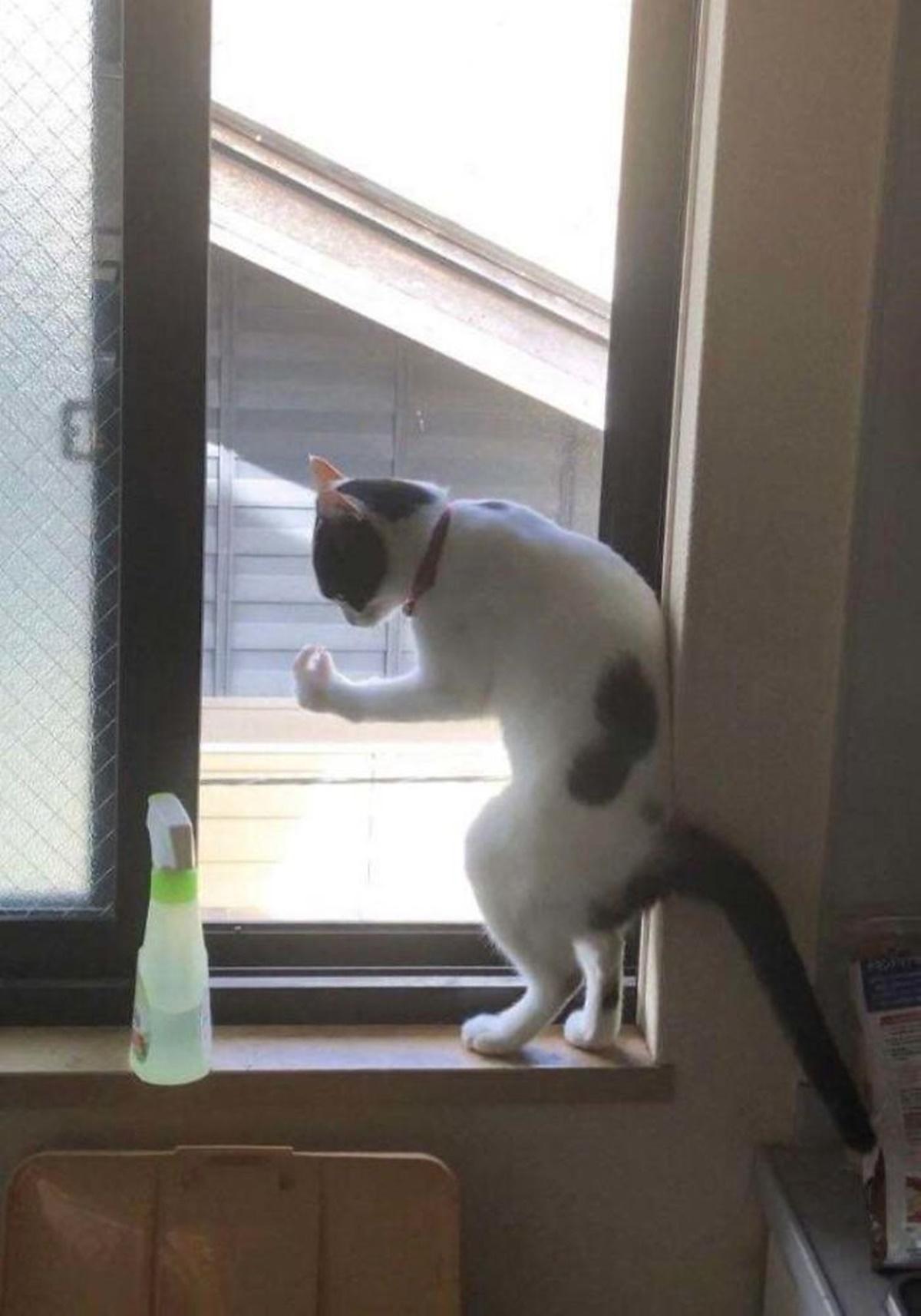 gatto si guarda zampa