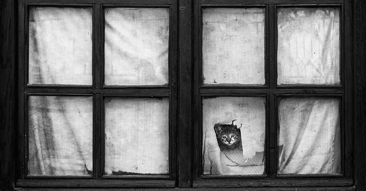 gatto che fa buco nella finestra