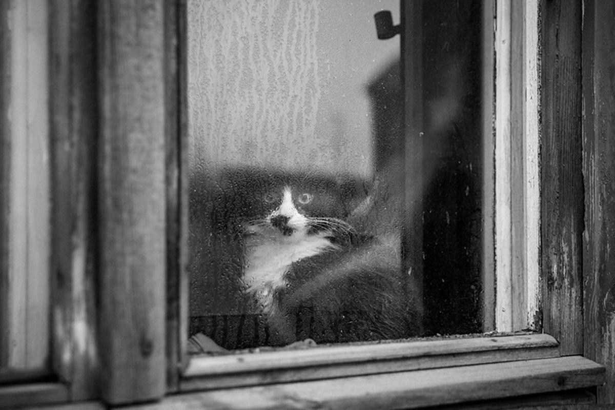 gatto in bianco e nero alla finestra
