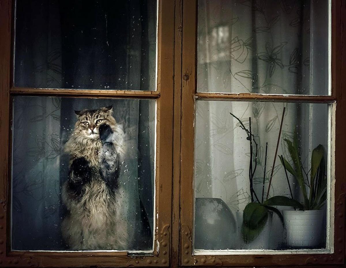 gatto aspetta