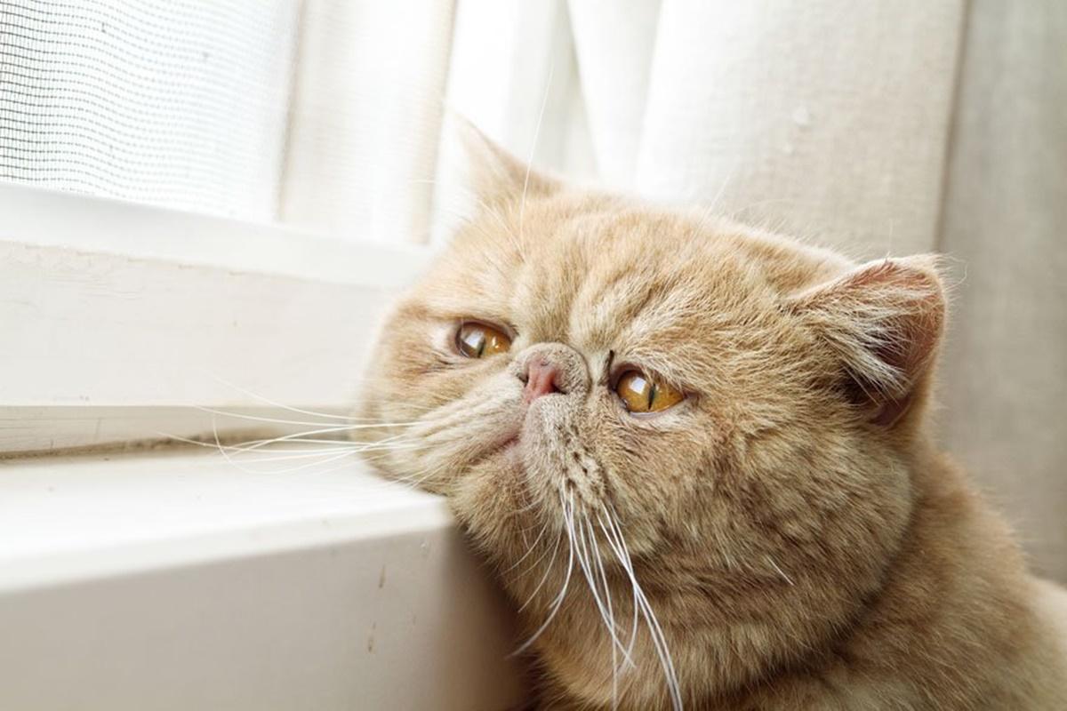 gatto triste alla finestra