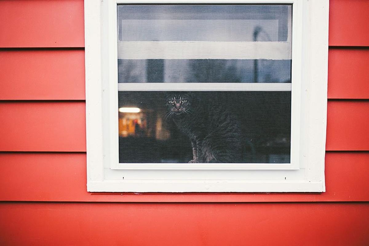 gatto spia dalla finestra