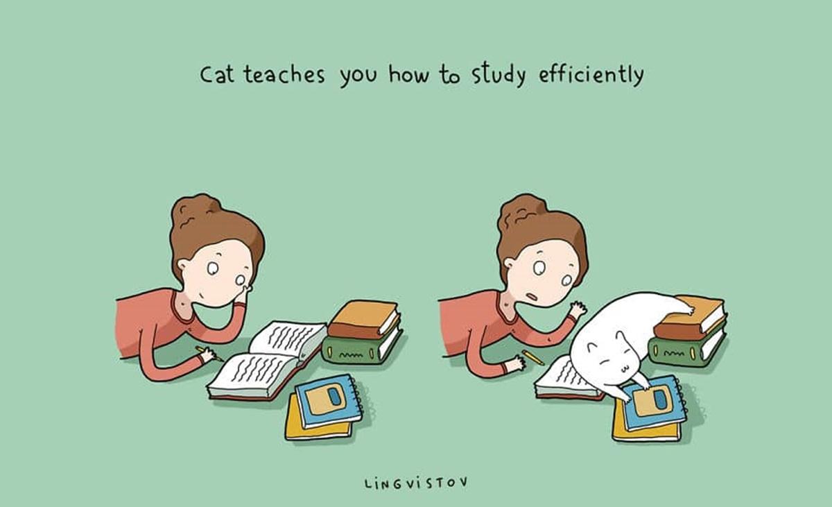 gatto studio