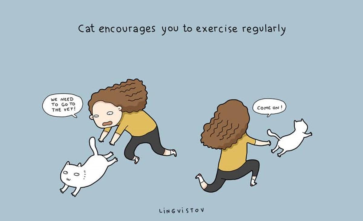 gatto fit