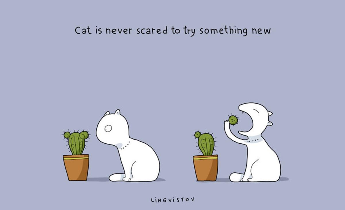 gatto temerario