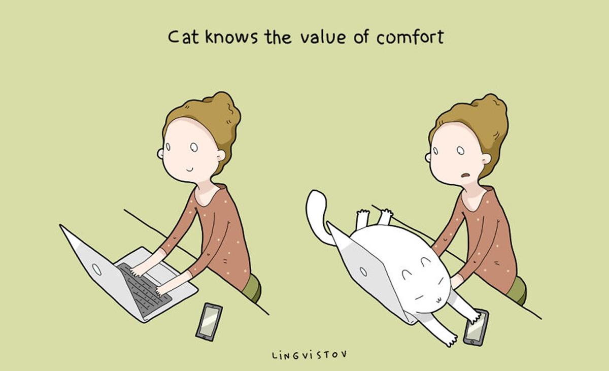 gatto comodo