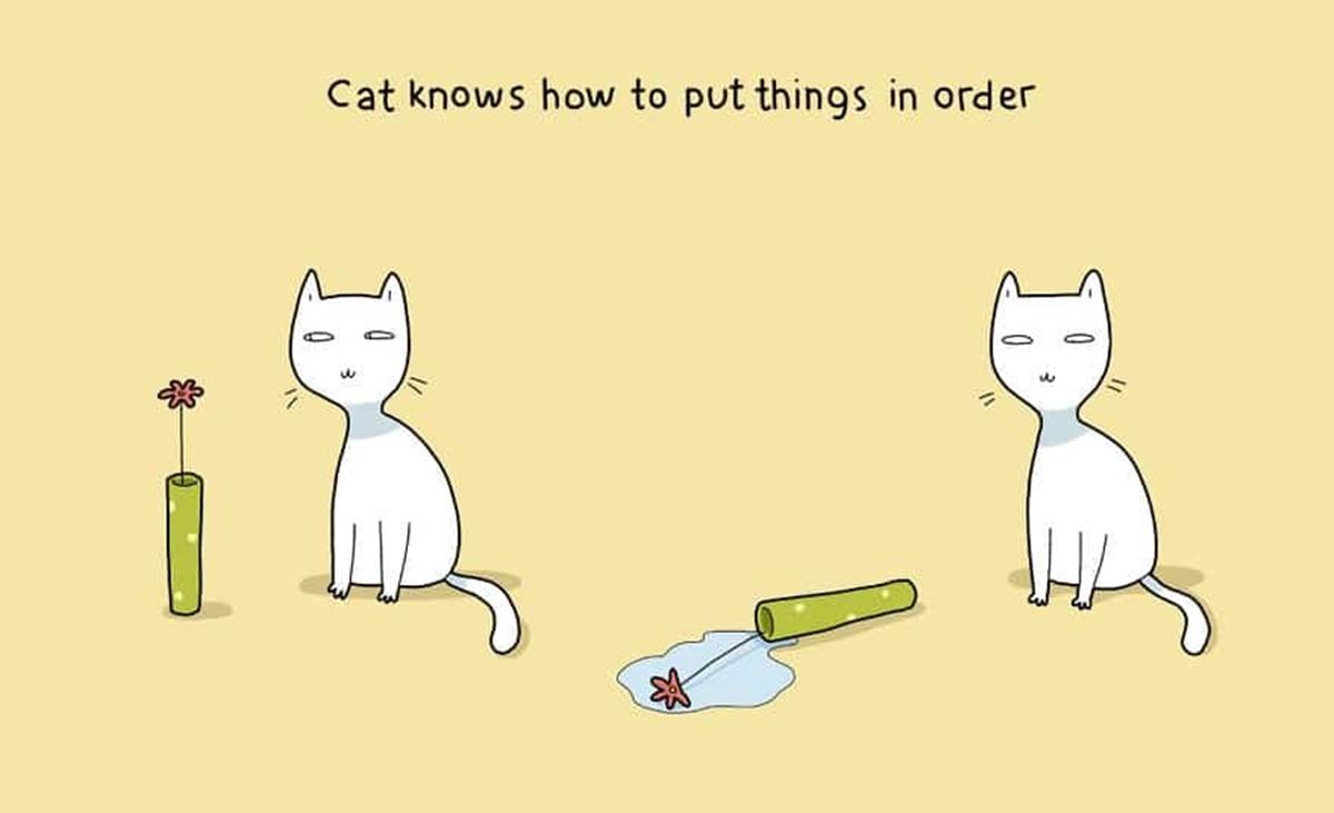 gatto ordinato