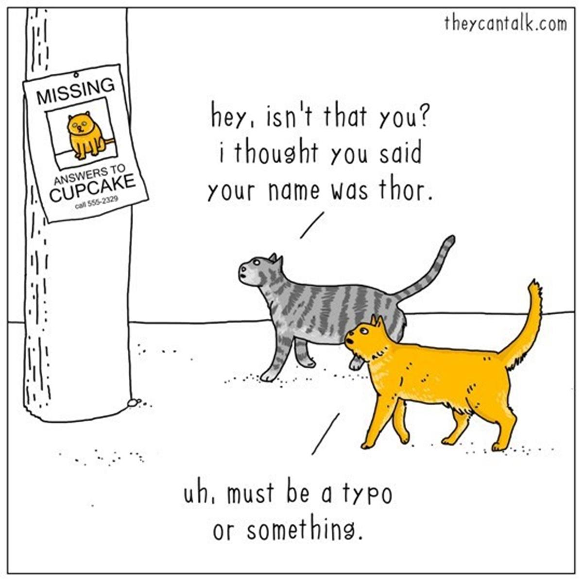 gatto smarrito