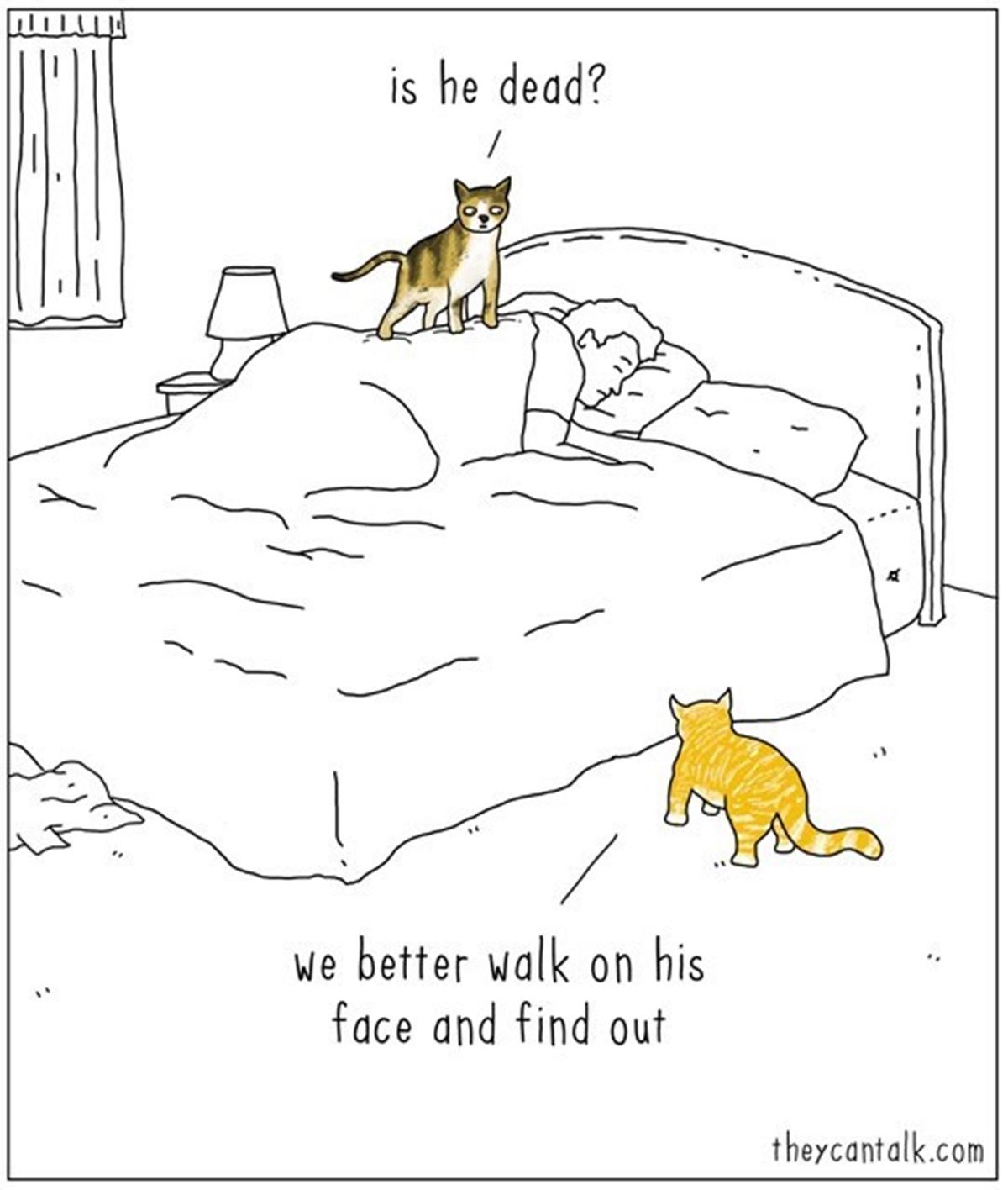 gatti sul letto