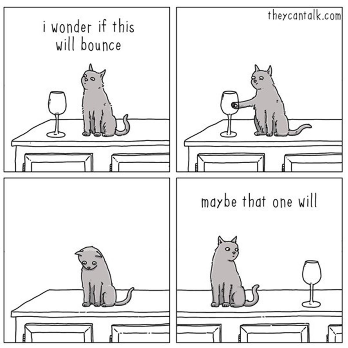 gatto bicchiere