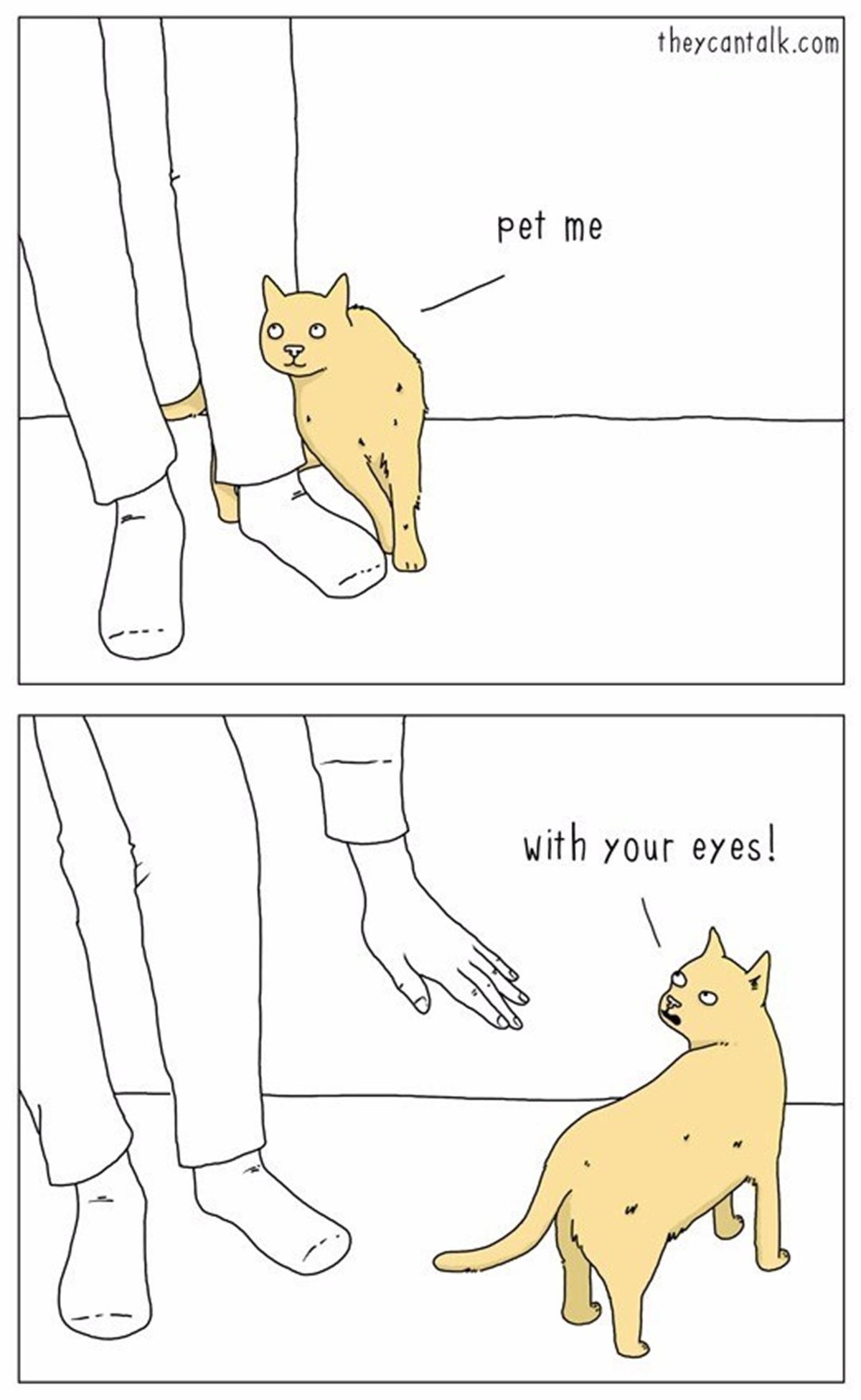 gatto carezza