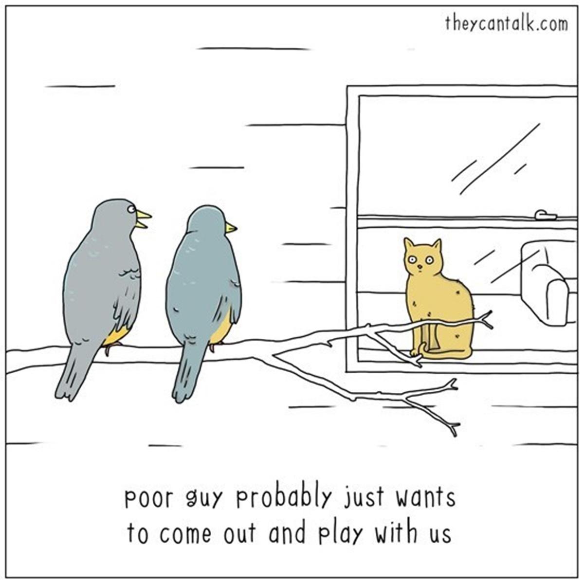 uccellini guardano gatto