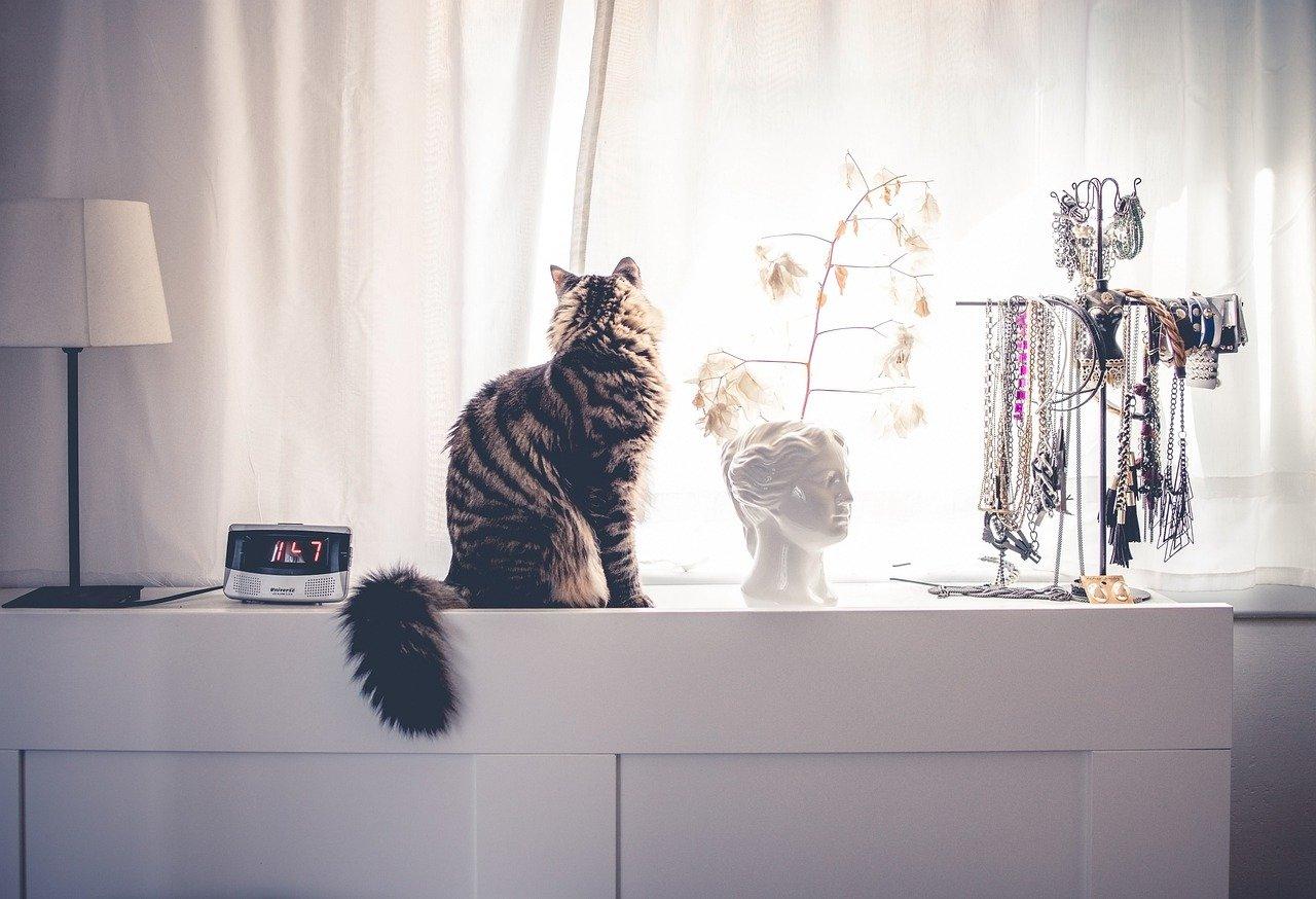 gatto attende padroncino