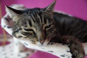 gatto steso su poltrona
