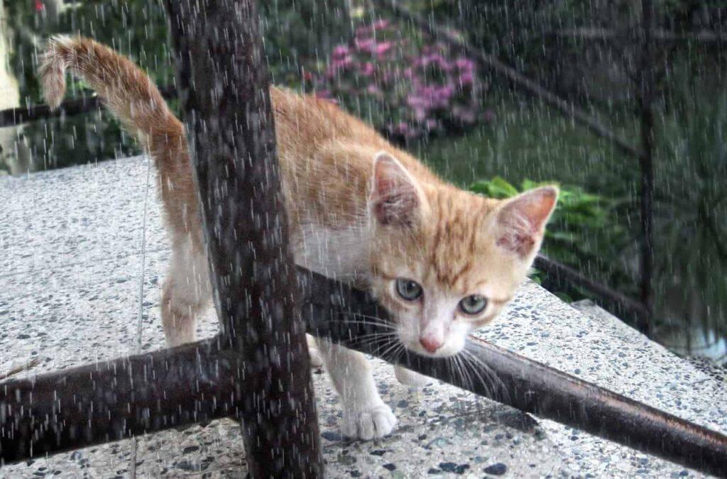gattino sotto la pioggia