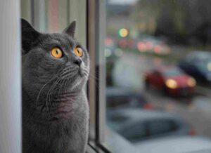 gatto guarda la pioggia fuori dalla finestra