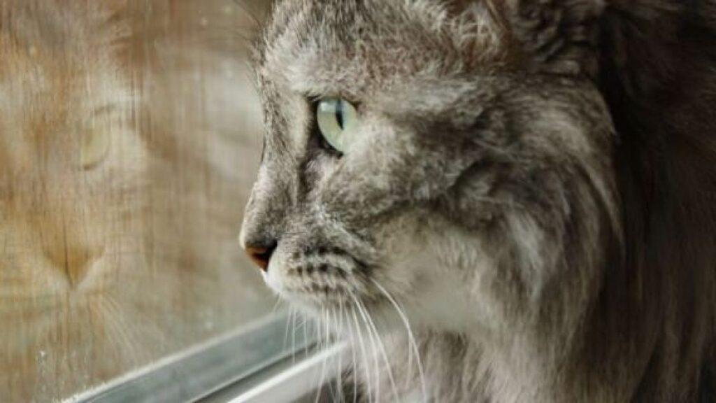 gatto osserva la pioggia