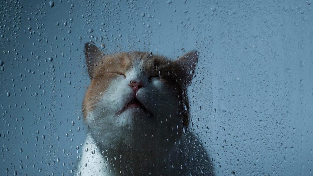 gatto dietro un vetro bagnato