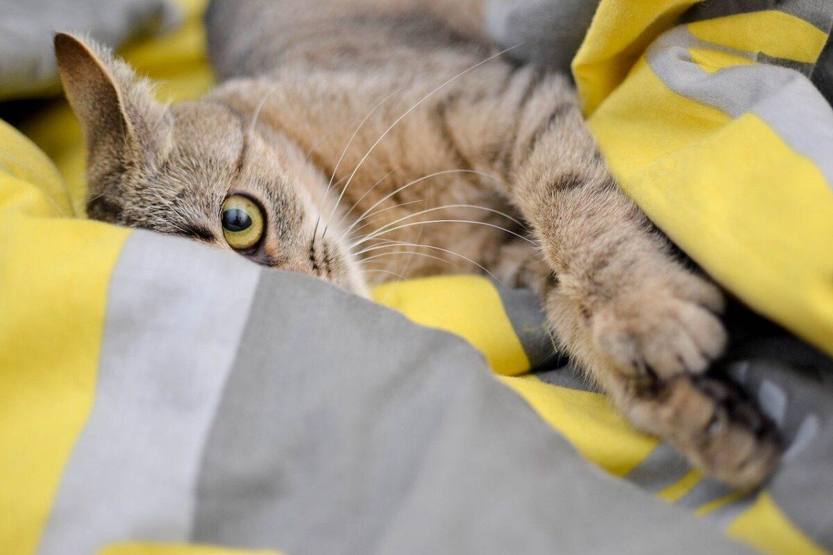gatto nascosto tra le lenzuola