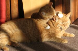 gattino gioca con la mamma