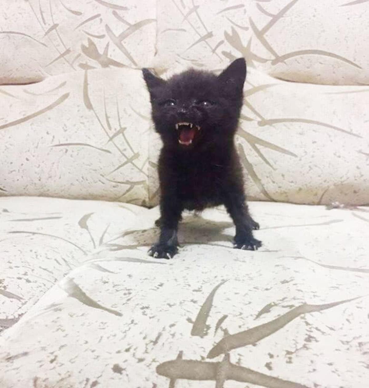 gatto nero sgrida padrone
