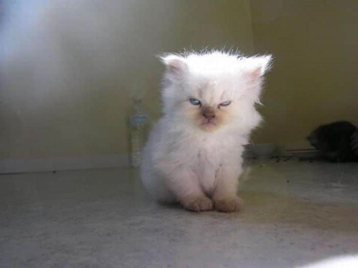 gatto bianco al sole