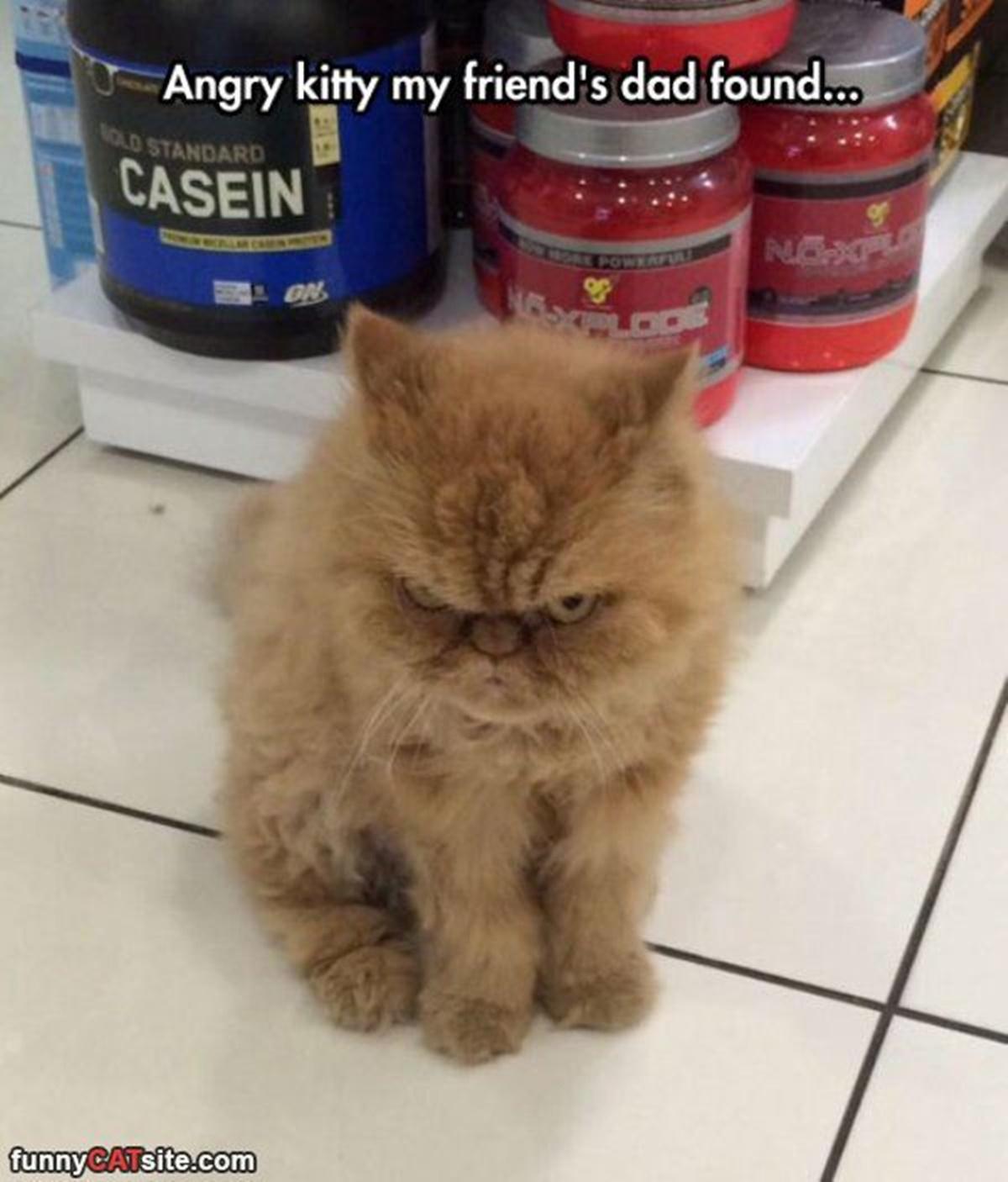 gatto deluso