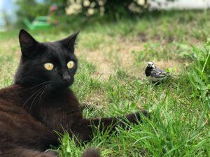 gatto e uccellino