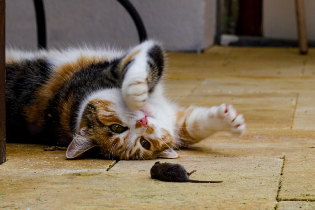 gatto e topolino