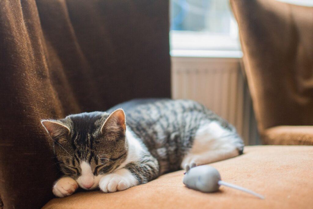 gatto e topo di gomma