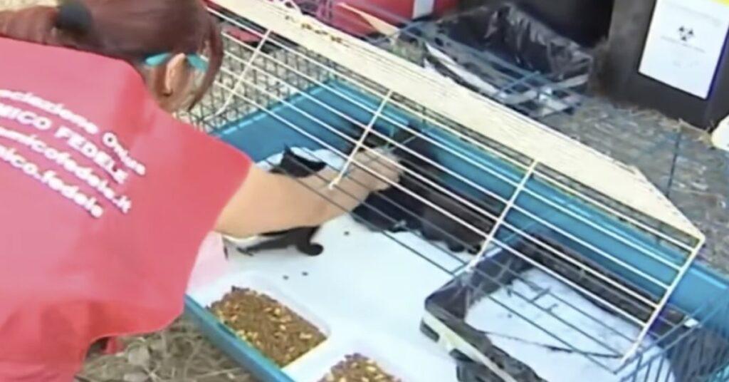 volontaria si occupa di gattini salvati