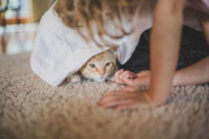 gatto nascosto sotto il tavolo