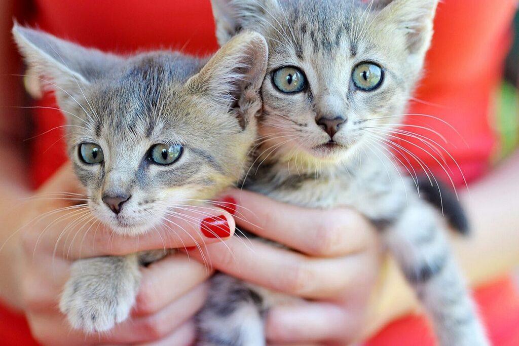 gattini tenuti in braccio