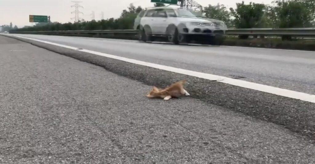 gattino lotta per salvarsi