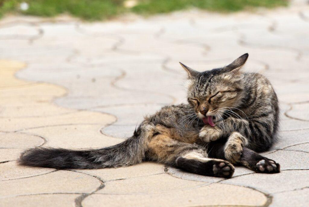 gattino che si lava