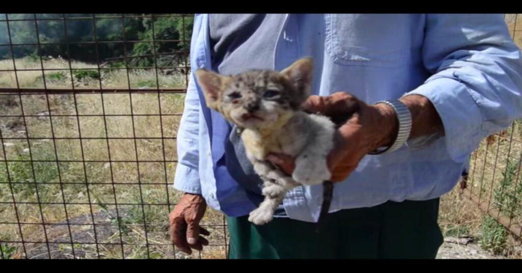 gattino salvato da un signore a Calvello