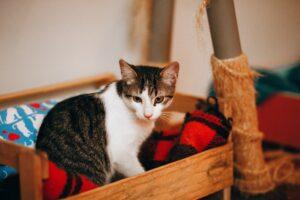 gatto nel lettino di legno