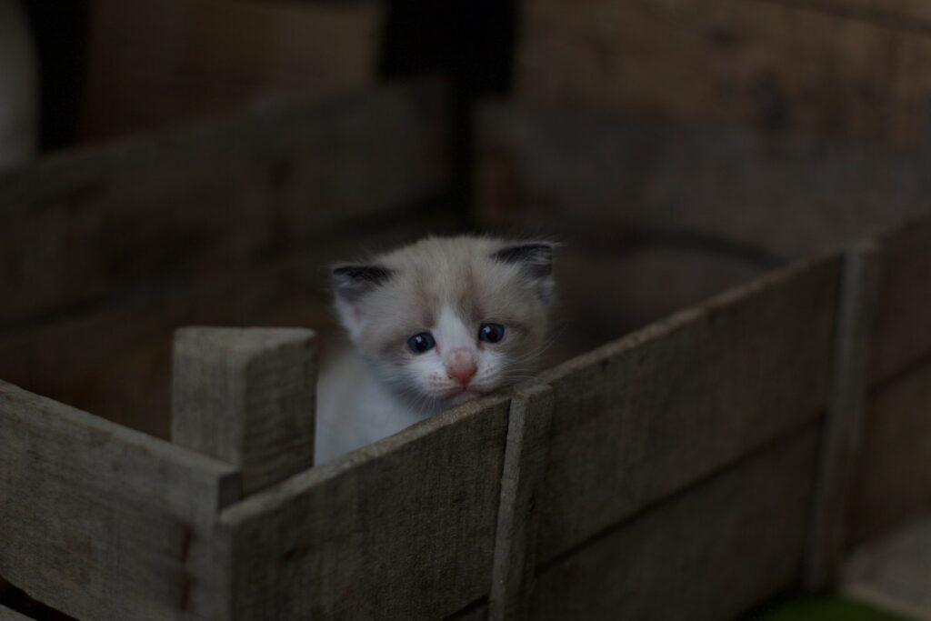 cucciolo in cesta di legno