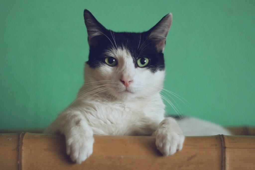 Gattino nel cassetto mentre guarda