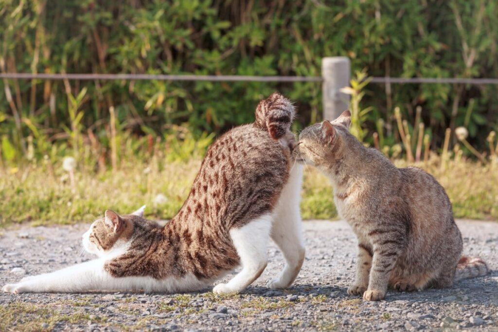 gatto annusa sedere di un altro gatto