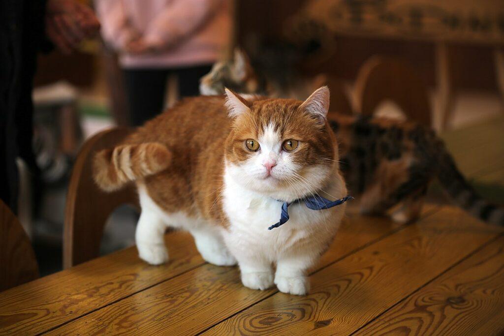 cucciolo di gatto bicolore
