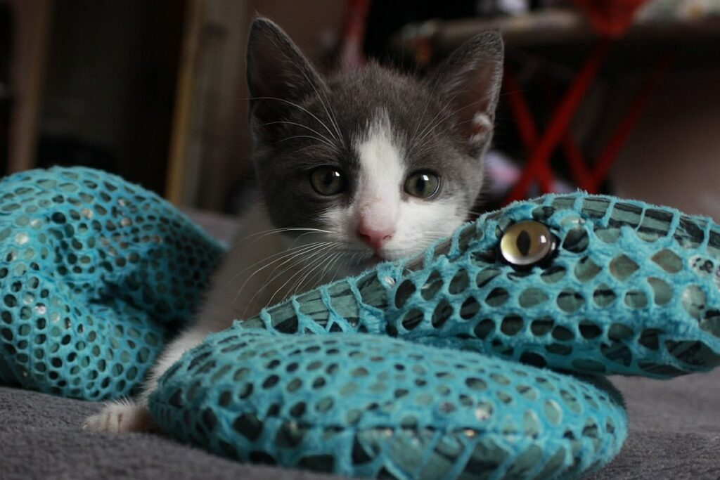 gattino gioca con un peluche