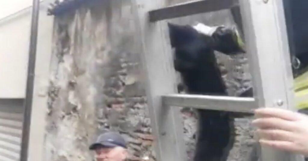 pompiere salva un gatto intrappolato a 10 metri