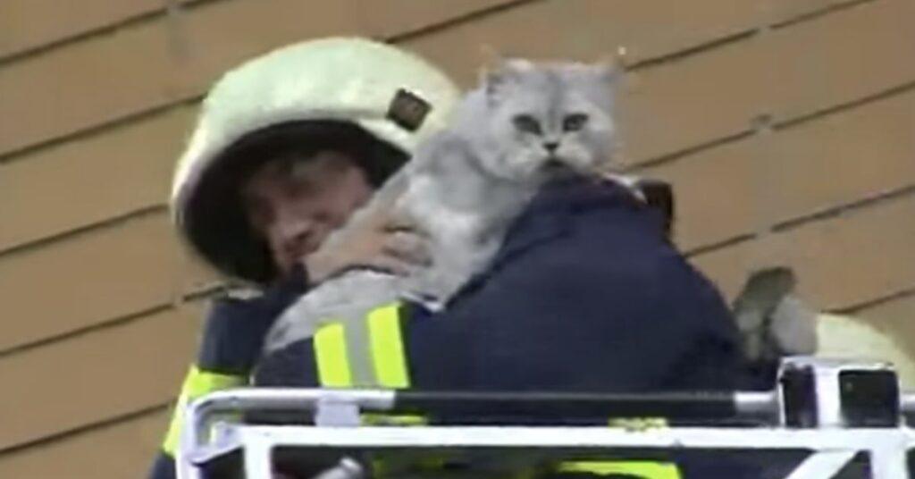 gatto in braccio al pompiere