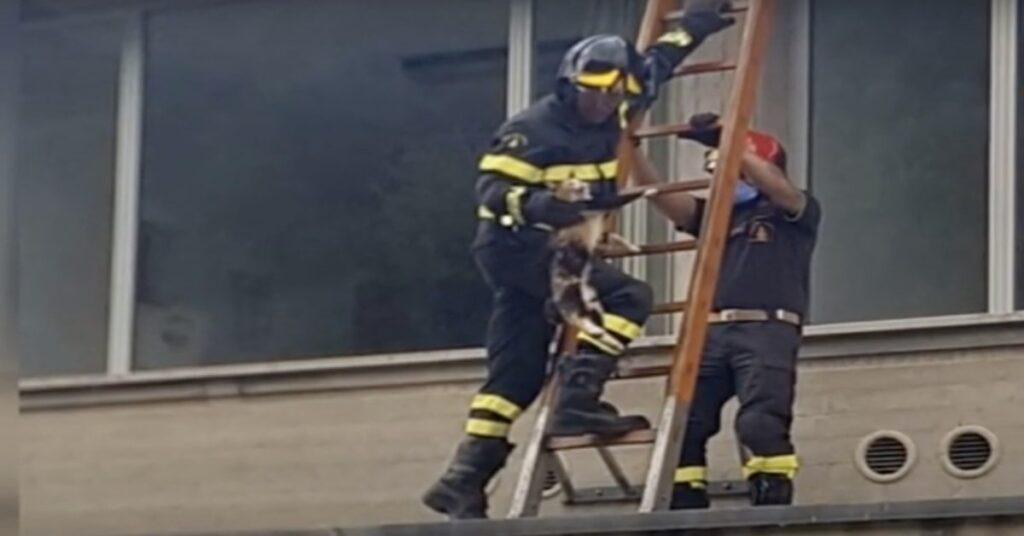 pompieri salvano un gatto bloccato sul tetto