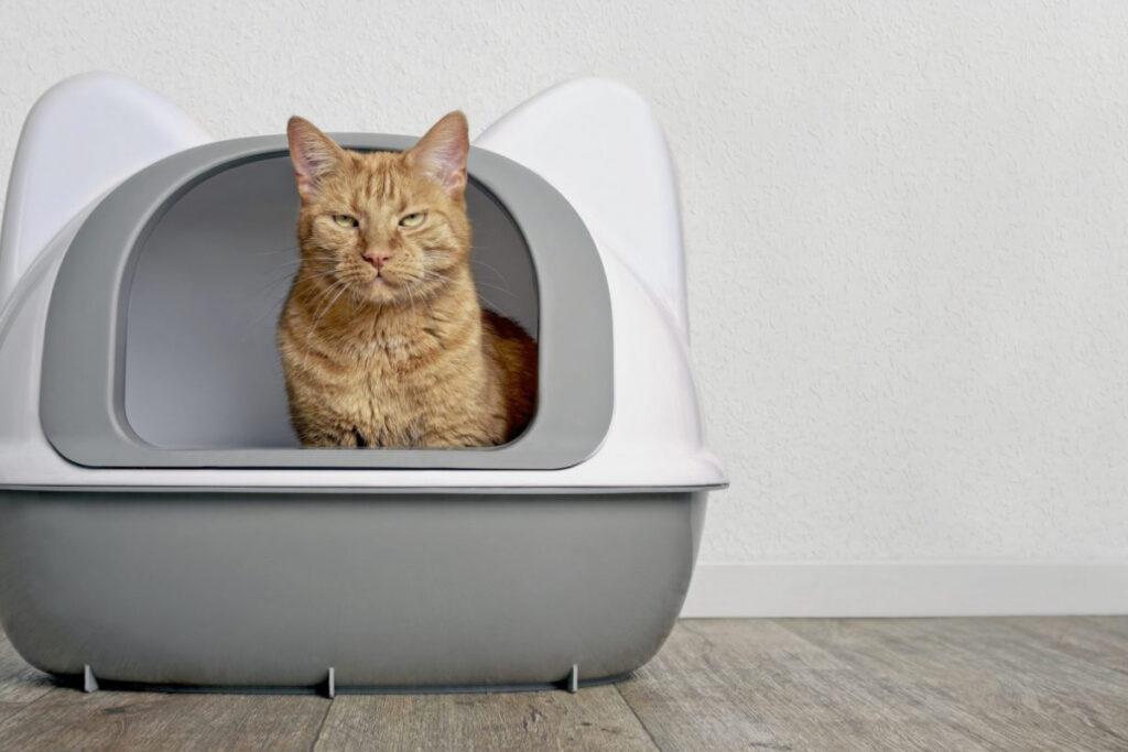 gatto nella lettiera chiusa