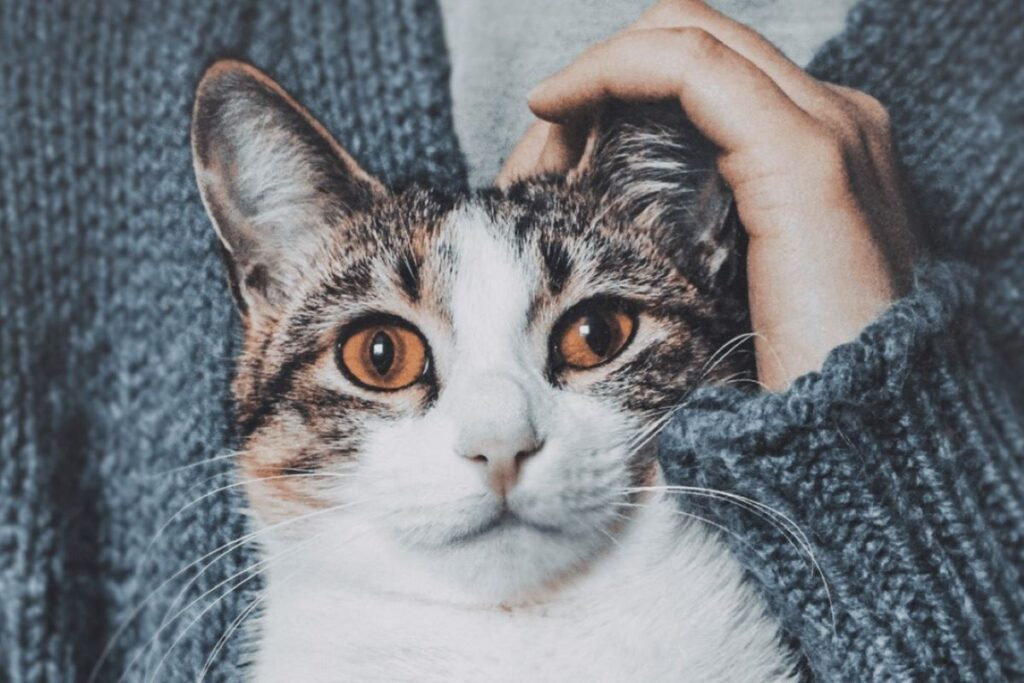 gatto perplesso