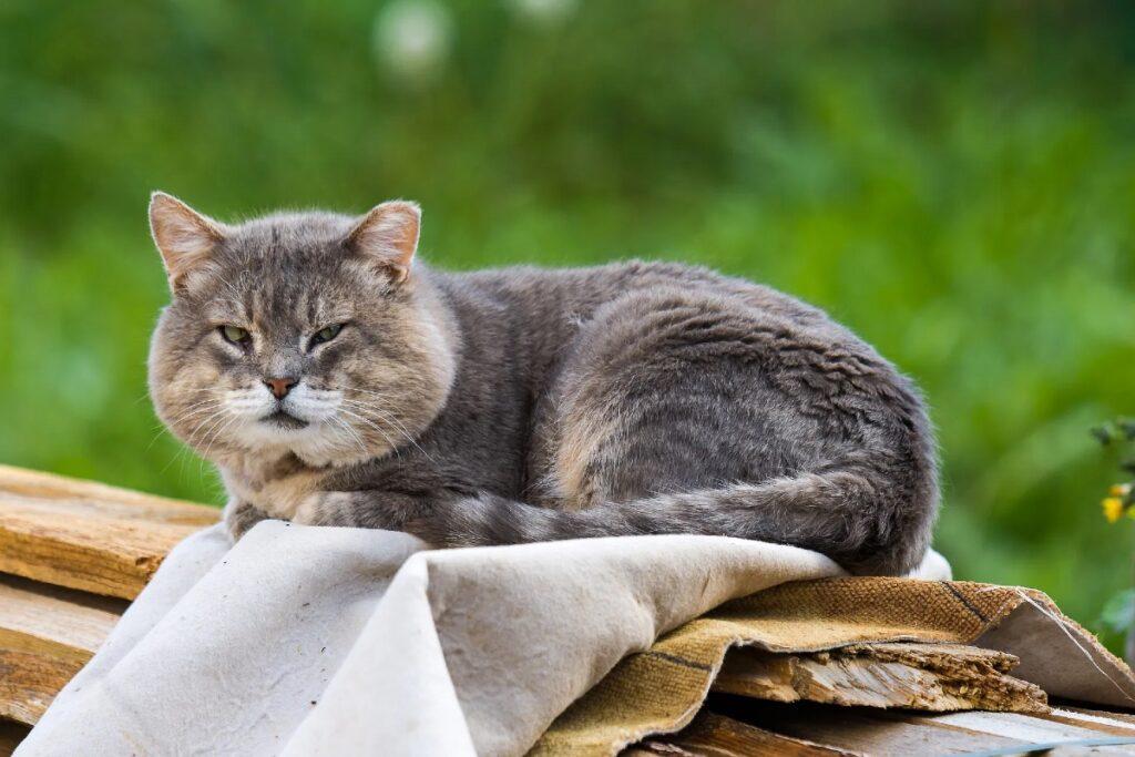 gatto nel giardino di casa