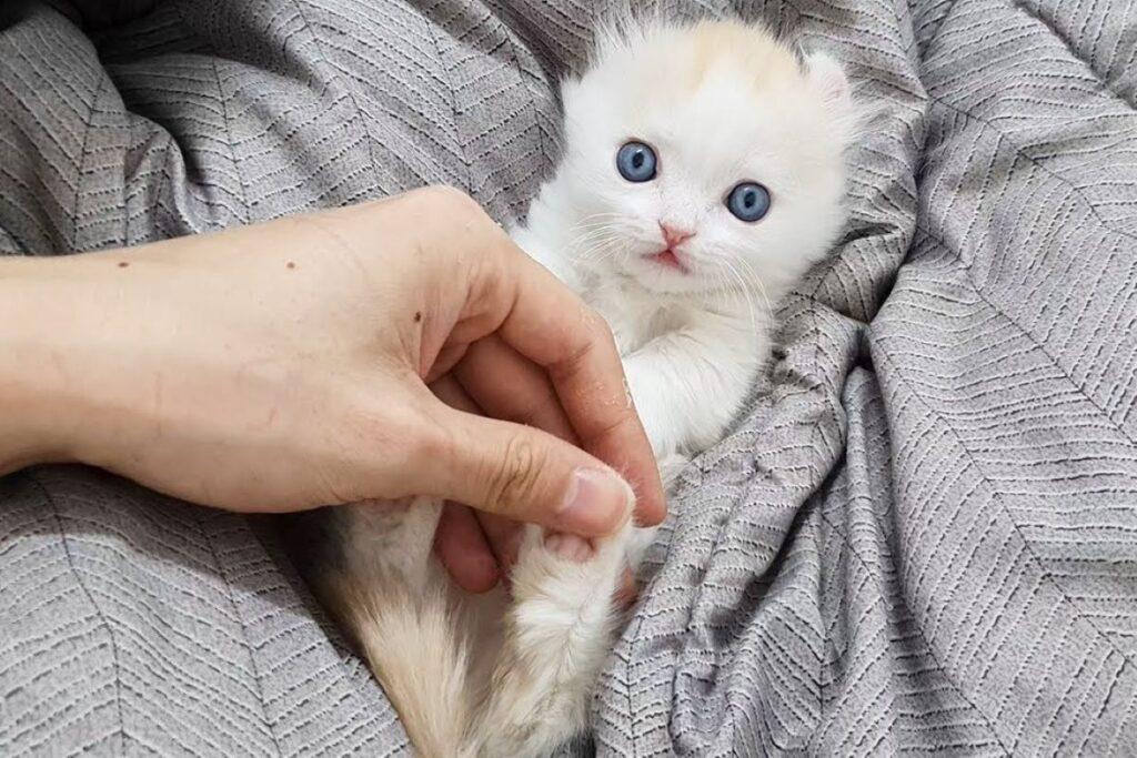 gatto che non ama essere toccato