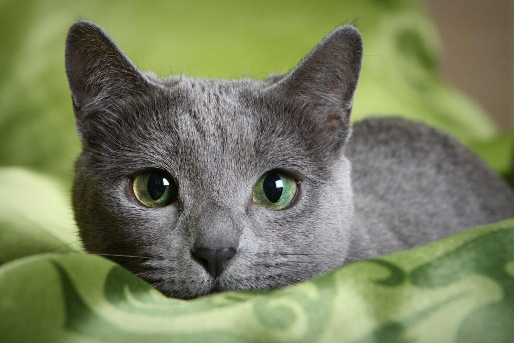 gattino scuro